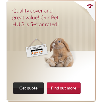 Pet insurance advert from the platform